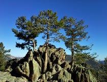 Três árvores sempre-verdes em Rocky Outcrop, Colorado imagem de stock royalty free