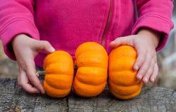 Três abóboras nas mãos da criança fotografia de stock royalty free
