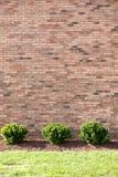 Três arbustos do jardim pela parede de tijolo Fotografia de Stock Royalty Free