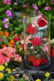 Três aumentaram na estada de vidro da abóbada no jardim fotografia de stock royalty free