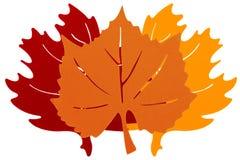 Três Autumn Leaves imagens de stock
