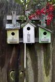 Três aviários coloridos na cerca de madeira velha com as bagas vermelhas do nandina. Foto de Stock
