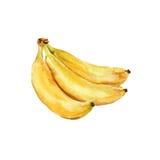 Três bananas watercolor Imagens de Stock Royalty Free