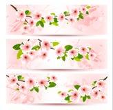 Três bandeiras da mola com refeição matinal de florescência de sakura Fotos de Stock Royalty Free