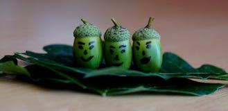 Três bolotas de sorriso que sentam-se em uma folha do carvalho Foto de Stock Royalty Free
