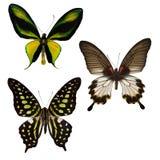 Três borboletas tropicais fotografia de stock royalty free