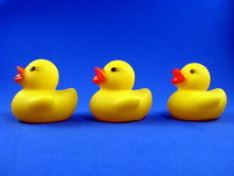 Três borracha Duckies Foto de Stock Royalty Free