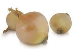 Três bulbos da cebola isolados no fundo branco Fotos de Stock