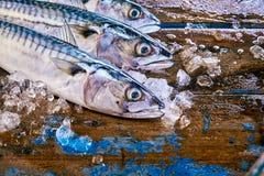 Três cabeças dos peixes da cavala cercadas pelo gelo Foto de Stock Royalty Free