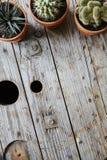 Três cactos na tabela industrial usada do vintage Imagens de Stock