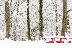 Três cadeiras vermelhas de Adirondack que sentam-se em um ajuste arborizado nevado, coberto na neve Fotos de Stock