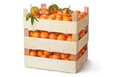 Três caixas de varejo de tangerinas maduras imagens de stock royalty free