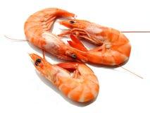 Três camarões Imagem de Stock