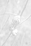 Três caracóis em uma lâmina de grama Imagens de Stock Royalty Free