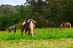 Três cavalos que comem a grama verde perto da floresta Fotografia de Stock Royalty Free