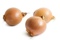 Três cebolas Foto de Stock Royalty Free
