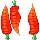 Três cenouras cruas Imagens de Stock