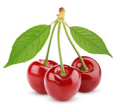 Três cerejas doces com folhas Fotografia de Stock Royalty Free