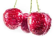 Três cerejas doces com gotas da água fotografia de stock royalty free