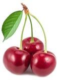 Três cerejas maduras Fotos de Stock Royalty Free