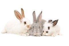 Três coelhos junto Foto de Stock Royalty Free