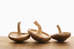 Três cogumelos. imagens de stock royalty free