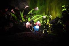 Três cogumelos de incandescência da fantasia no close-up escuro da floresta do mistério O tiro macro bonito do cogumelo mágico ou fotos de stock