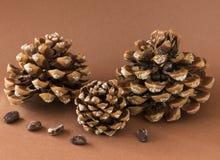 Três cones do pinho com pinhões Fotos de Stock Royalty Free
