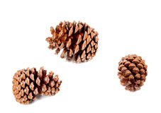 Três cones grandes do pinho Fotos de Stock Royalty Free