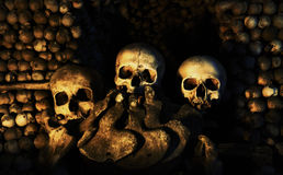 Três crânios humanos Foto de Stock