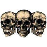 Três crânios humanos Imagem de Stock
