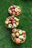 Três cubetas encheram-se com as maçãs frescas fora na grama Fotos de Stock