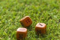 Três cubos dos dados no fundo da grama Fotografia de Stock