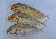 Três de peixes de atum, tirando no fundo do Livro Branco Fotografia de Stock Royalty Free