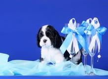 Três decoraram vidros e um cachorrinho imagens de stock