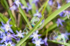 Três delicados e bolhas de sabão coloridas que aderem-se a uma lâmina de Imagem de Stock
