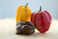 Três do habanero pimentas da malagueta picante muito, chinenses amadurecidos do capsicum na tabela de madeira Imagem de Stock Royalty Free