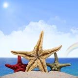 Três estrelas do mar Foto de Stock