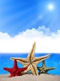 Três estrelas do mar Fotografia de Stock