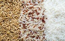 Três fileiras do arroz Foto de Stock Royalty Free