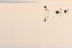 Três flamingos foto de stock