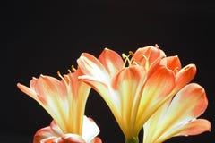 Três flores alaranjadas imagens de stock