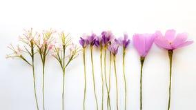 Três flores artificiais no fundo branco imagem de stock