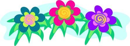 Três flores coloridas com centros espirais Fotografia de Stock