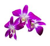 Três flores da orquídea Fotos de Stock Royalty Free