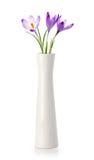 Três flores do açafrão no vaso branco Fotografia de Stock