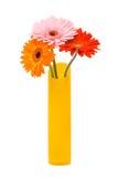 Três flores do gerber fotografia de stock