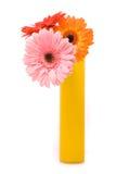 Três flores do gerber no vaso amarelo imagem de stock royalty free