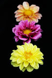 Três flores na água Fotografia de Stock Royalty Free