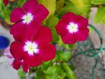 Três flores pequenas imagens de stock